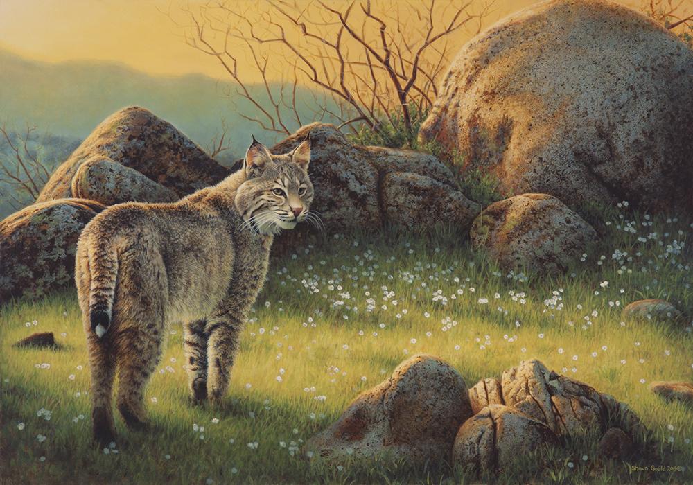 RidgelineBobcat