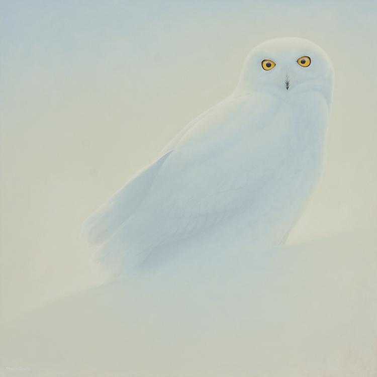 SnowyWhite1