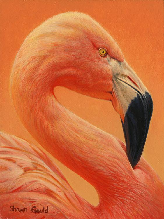 FlamingoFlare