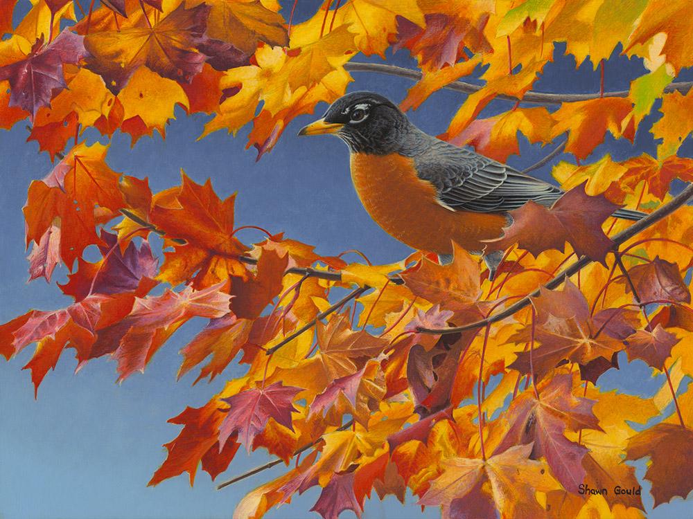 AutumnRobin
